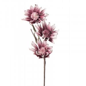 L'OCA NERA kvet 1P106