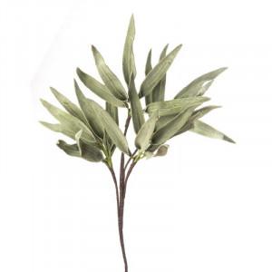 L'OCA NERA rastlina 1P118