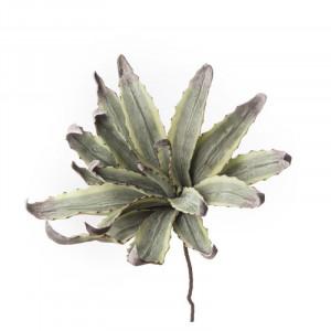 L'OCA NERA rastlina 1P124