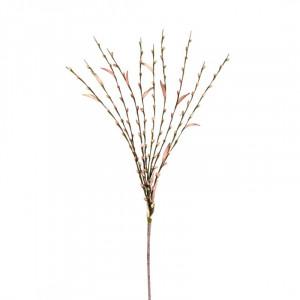 L'OCA NERA rastlina 1P138