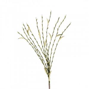 L'OCA NERA rastlina 1P139