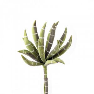 L'OCA NERA kvet 1P140