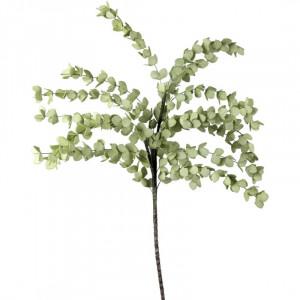 L'OCA NERA rastlina 1P142
