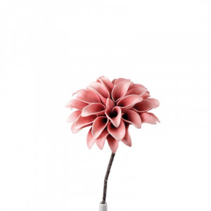 L'OCA NERA kvet 1P146
