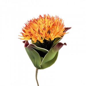 L'OCA NERA kvet 1P147