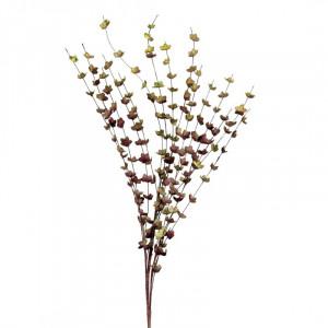 L'OCA NERA rastlina 1P150