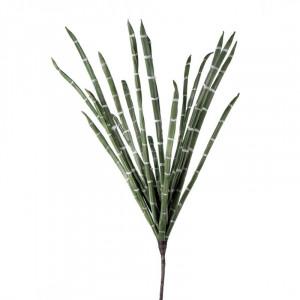 L'OCA NERA rastlina 1P151
