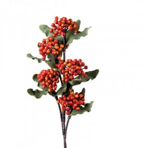 L'OCA NERA rastlina 1P153